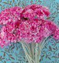 Fuchsia Gypso